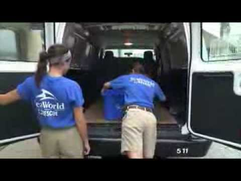 SeaWorld Orlando Animal Rescue Team Returns Final Kemp's Ridley Sea Turtle of 24 Rescued in 2012