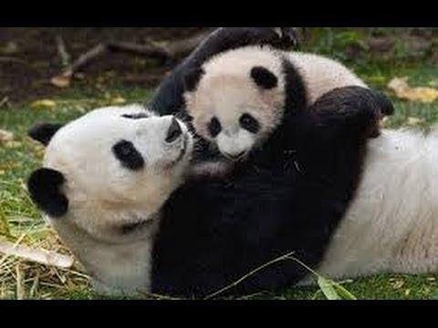 Giai thoại động vật Đài Loan - Trung Quốc