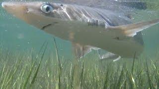 水溜りに取り残されたサメ