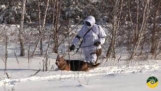 Тренування інженерно-саперних підрозділів на Луганщині