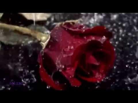 Marina V - Rain on the Butterfly