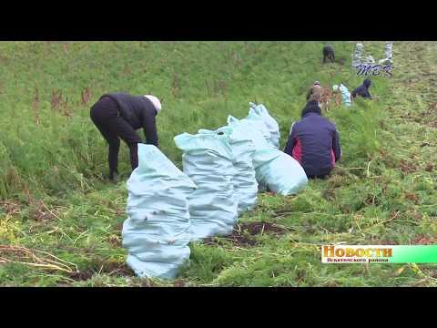 Борщевой набор на пятёрку. Овощеводы района собирают небывалый урожай