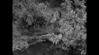 Tarzan Yell (and Jane Too :D