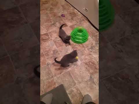 Kittens having a ball