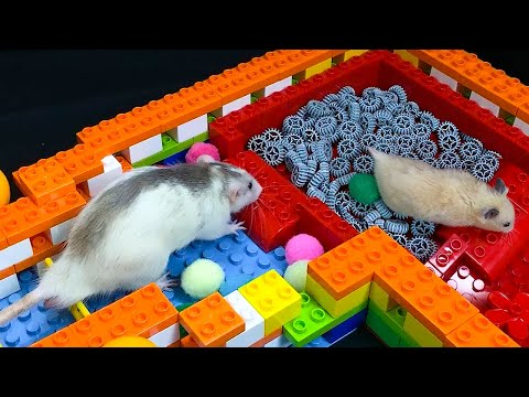 My Funny Pet HAMSTER vs RAT: OBSTACLE COURSE RACE Ep.1