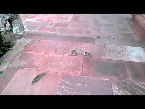 Čovek snima vevericu. Veverica se uvredila i...
