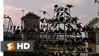 Crows On The Playground The Birds (5/11) Movie CLIP