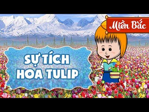 Su tich hoa Tulip - Sự tích hoa Tulip - Phim hoạt hình hay cho bé