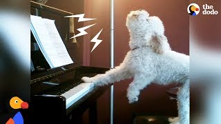 Singing Dog Loves to Play Piano + Other Dogs Who Found Their Passion In Life | The Dodo