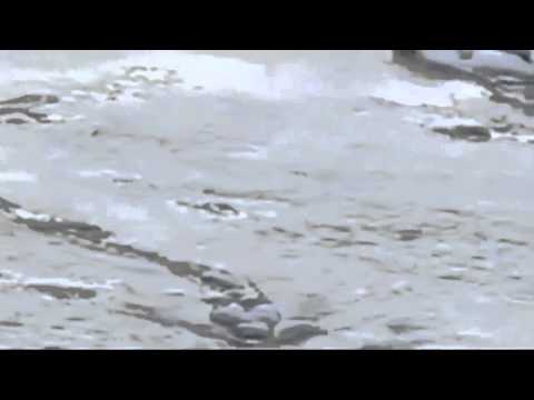 Quái vật hồ Lock Ness được xác nhận là có thật bởi chính phủ Iceland