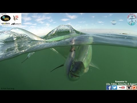 Fish That Snag - A Day of Reflexion Lures
