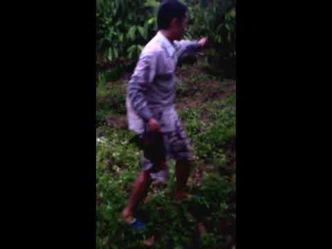 cách bẫy gà rừng bằng lưới đơn giản - bẫy gà rừng 01642220162