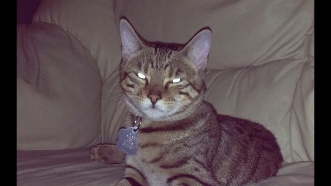 Funny talking cat videos on youtube Funny Videos Of Cats