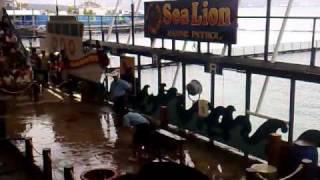 Sea Lion Marine Patrol.mp4 view on youtube.com tube online.