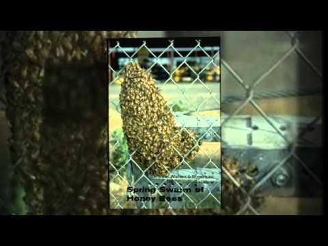Pest Control Service phoenix az | 602-459-9711