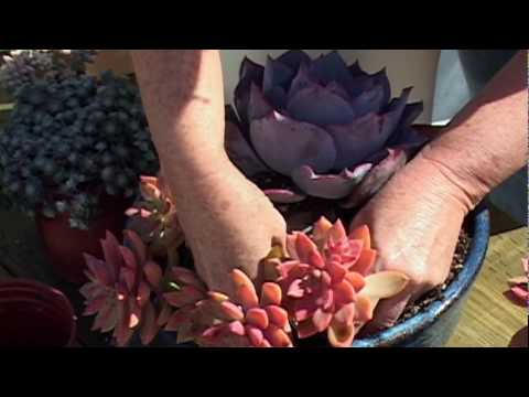 Debra lee baldwin how to plant a succulent container garden youtube - Succulent container gardens debra lee baldwin ...