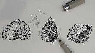 Pen And Ink Drawing Tutorials How To Draw Sea Shells