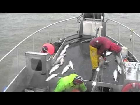 Alaskan Commercial Salmon Fishing in Bristol Bay, Prince William Sound, and Cordova