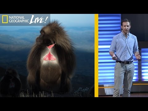The Fascinating Lives of Bleeding Heart Monkeys (Part 1) | Nat Geo Live