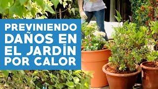 Prevenir daños en el jardín por el calor del verano