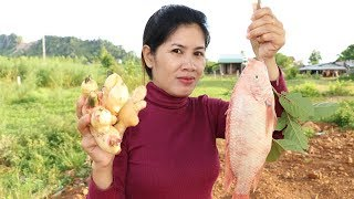 Awesome Cooking Ginger With Fish delicious Recipe -  Cook Fish Recipes -  Village Food Factory