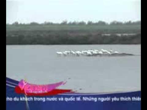 Xem chim Vườn quốc gia Xuân Thuỷ (Nam Định) - VTV