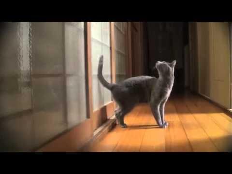 Compilation de chats droles