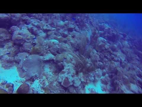 Turtle Power Barbados - GoPro Hero3
