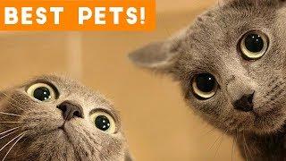 Best Animal Videos of 2018 (so far)   Funny Pet Videos