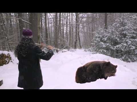 Uśpiła niedźwiedzia... fletem!