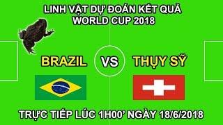 Linh Vật Dự Đoán kết quả trận Brazil vs Thụy Sỹ   Trực tiếp lúc 1h00 18/6 trên VTV3