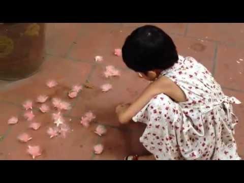 Beautiful flowers-Raw Fish - Lộc vừng hoa màu hồng- Ăn gỏi cá mè