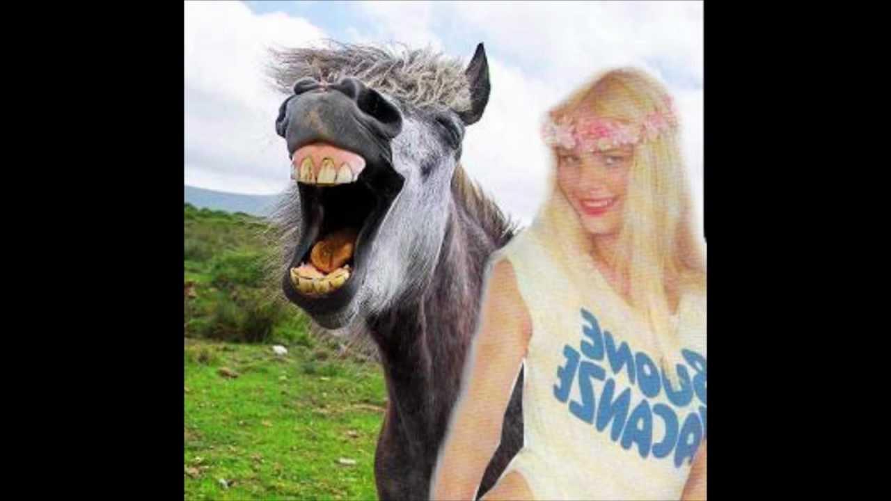 cicciolina horse