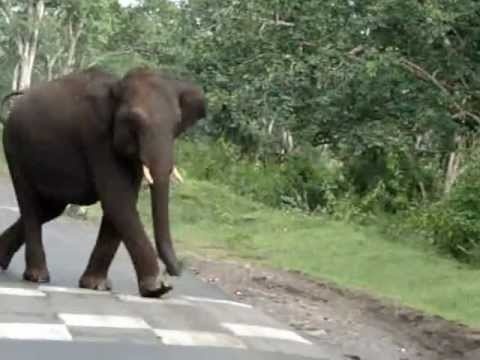 Elephant attack in kerala forest - photo#6