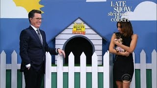 The Late Show 'Rescue Dog Rescue' With Aubrey Plaza