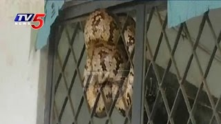 Python causes flutter in Narayankhed school