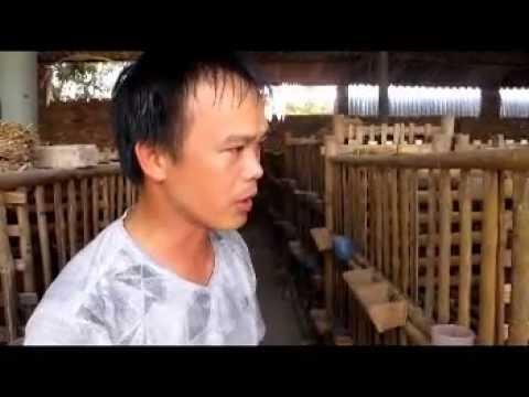 Kỹ thuật nuôi chim bồ câu pháp - chimbocau.vn - 0913503808