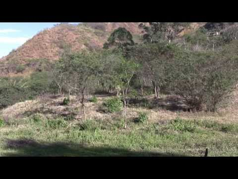 Vilcabamba Ecuador land for sale part 1 of 3