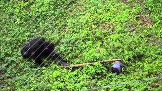 [Smart chimp wants ball] Video