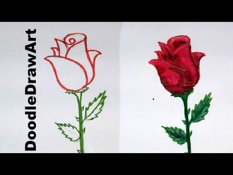 Drawing how to draw a rose step by step easy lesson for for Easy to draw roses for beginners
