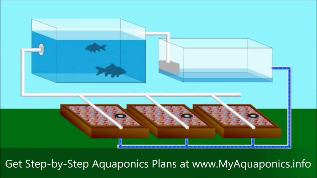 Backyard Aquaponics Kit : DIY Aquaponics  Do It Yourself Aquaponics Systems  Starter Kit