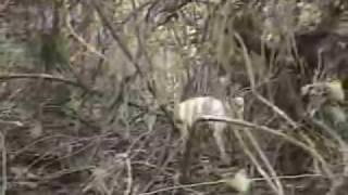 (Reportagem Globo) Caçada De Onça Pintada Pantanal MS