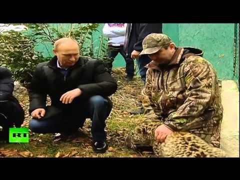 image vidéo Poutine est entré dans une cage avec un léopard