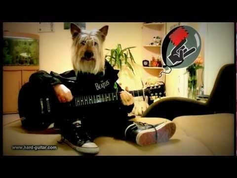 Happy Birthday Rock Song - Dog playing guitar - Funny Greeting Card - Human Dog