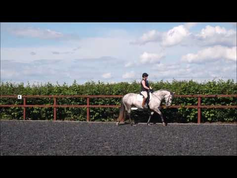 54. Basic core strengthening exercises for horse riders: Riding exercise 1