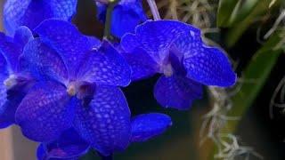زهور الأوركيد ترسم مشهد استوائ...