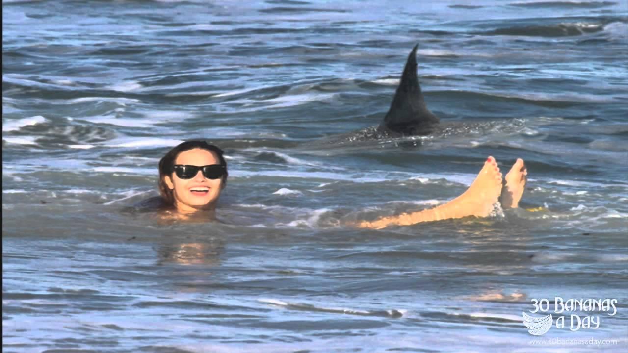 Maui Shark Attacks 2014