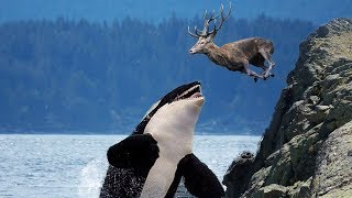 BADASS Ocean Creatures That EAT Land Animals!
