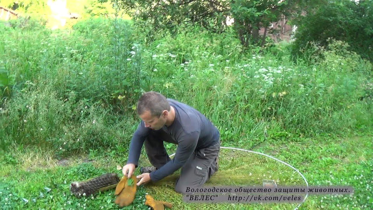 Как делать петли на фазана фото