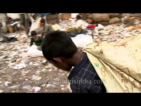 Working in dumpyard : Delhi rag pickers